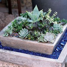 Mixed Succulents -     A living arrangement of succulents demands little care and will last for years. The color of these containers brings out the colors in the plants.