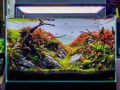 Aquarium Garden, Aquarium Landscape, Nano Aquarium, Nature Aquarium, Home Aquarium, Aquarium Design, Planted Aquarium, Aquarium Fish, Saltwater Tank