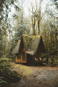 Tiny Cabin in the wood. Forest Cabin, Forest House, Woodland House, Cottage In The Woods, Cabins In The Woods, Tiny House Big Living, Cabins And Cottages, Cozy Cabin, Cabin Homes