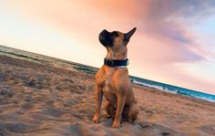 Chay Dogs, Hotels, Activities, Animaux, Pet Dogs, Doggies