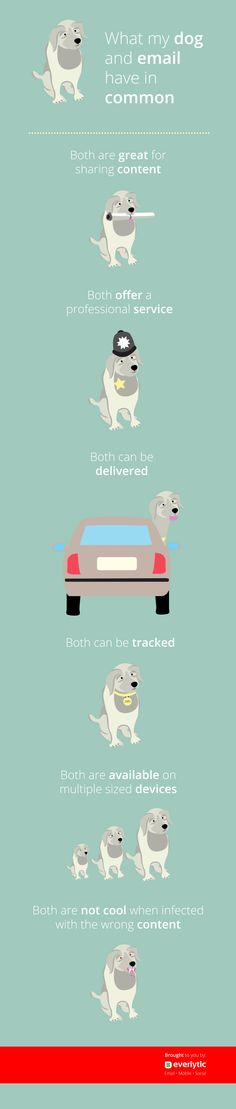 What My Dog and Email have in common Infographic