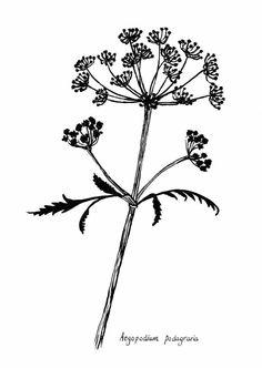 Mooie illustratie van een zevenblad. Gemaakt door Marieke ten Berge voor Petite Louise. Afmeting is 10 x 15 cm.