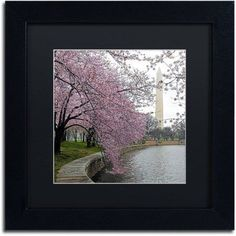 Trademark Fine Art Washington Blossoms Canvas Art by CATeyes, Black Matte, Black Frame, Size: 16 x 16, Green