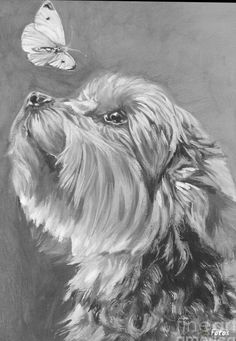 "Yorkshire Terrier YORKIE dog portrait art canvas print of LAShepard painting "" - ABOUT THE PRINT: Copyright text is for display purposes only and will not appear on your artwork. Yorkshire Terrier, Animal Drawings, Pencil Drawings, Art Drawings, Pencil Art, Dog Portraits, Portrait Art, Yorkie Dogs, Yorkies"