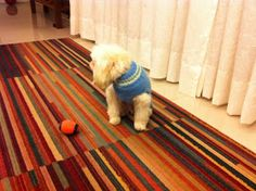 Koisas da Kaká: PAP - Roupinha para cachorro Knitted Dog Sweater Pattern, Dog Coat Pattern, Knit Dog Sweater, Dog Clothes Patterns, Coat Patterns, Knit Baby Booties, Crochet Flower Patterns, Dog Dresses, Dog Coats