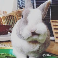 Oh gosh! That cozy place where I peed in this morning was your wardrobe? And you are telling me now?  So sorry I was looking for new pee spots in the house... it's so boring to pee always in the same place!  #FunnyTiffo  Follow Tiffo on Instagram @tiffoco