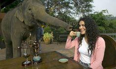 50 dólares por xícara – A forma peculiar de se fazer o café mais caro do mundo