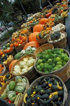 Fall Harvest ~ Photos Hub