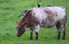 Gepind vanaf vroegevogels.vara.nl - Ekster
