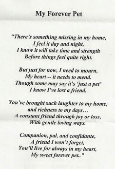 Pet Loss Quotes - Ever Memorial Grief Support When Pets . Souvenir Animal, I Love Dogs, Puppy Love, Dogs Tumblr, Pet Poems, Cat Loss Poems, Dog Loss Poem, Jiff Pom, Pet Loss Grief