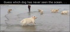 Guess which dog has never seen the ocean....((((:-)))