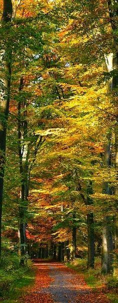 Fall Glory - Autumn
