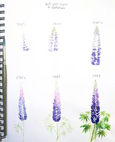 NEW step by step! Today I am teaching you how to paint Lupins TI
