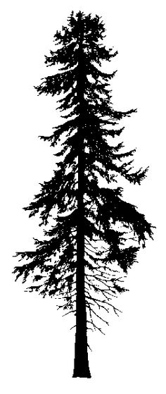 Doug Fir Silhouette would make a perfect back tat. Right on the spine. HUGE. I'm in love, need it right meow