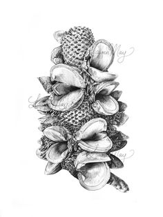 Mr Banks - botanical graphite drawing by Lauren Maysk Vintage Botanical Prints, Botanical Drawings, Botanical Art, Plant Illustration, Pencil Illustration, Botanical Illustration, Graphite Drawings, Drawing Sketches, Drawing Ideas