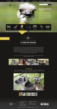 Website design would be so much easier if you could add funny animals on EVERY page! Zoo website concept.