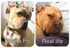 Who else can relate?   http://ift.tt/2m3bmpL via /r/dogpictures http://ift.tt/2m7yeEW  #lovabledogsaroundtheworld