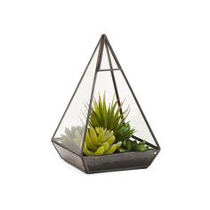 Mixed Succulent In Pyramid Glass Terrarium (€22) ❤ liked on Polyvore featuring home, home decor, floral decor, plants, filler, succulent terrarium, glass terrarium, glass home decor, glass succulent terrarium and succulent plant terrarium