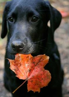 I fall for labs