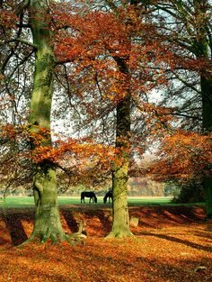 autumn ponies, New Forest National Park, UK | New Forest District Council