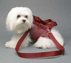 Woofle 'n Beads Puppy Purse Carrier in Burgundy - Carriers - Puppy Purse Carriers Posh Puppy Boutique