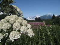 Photo Gallery - Pictures of Alaska's Capital City | Juneau CVB