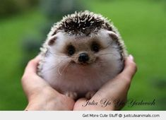 holding baby hedgehog hands happy smiling forest cute animals wild wildlife species planet earth nature pics pictures photos images