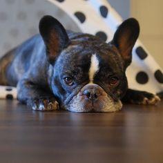 dog イヌ 犬可愛い画像まとめ http://41.media.tumblr.com/a9ed26ecbdb6a4fabb7e6345ff85e94e/tumblr_o65ng7ZuR91v69rhio1_75sq.jpg