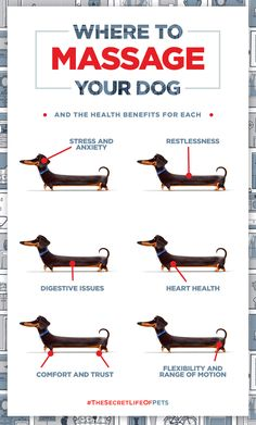 Buddy's Guide on where to massage your dog and the health benefits for each. | The Secret Life of Pets | In Theaters July 8 More