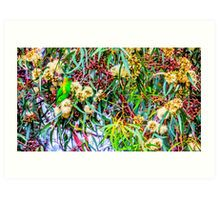 Red Faced Fig Parrot at the Botanical Garden in Eaglehawk, Victoria Art Print