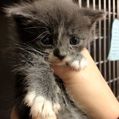 We need foster homes for cuties like this!