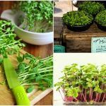 10 Intensely Flavorful Microgreens Everyone Can Grow Indoors