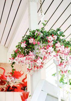 Ihanat kesäkukat: näin onnistuu kylvö ja hoito   Meillä kotona Garden Maintenance, Thinking Outside The Box, Cool Plants, Washington State, Container Gardening, Outdoor Living, Floral Wreath, Wreaths, Flowers