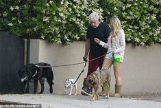 Blended family: Ron, 69, walked his dog Nigel as Allison took care of her pooches Ernie an...