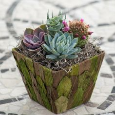 Succulent plants have burst into increasing prominence. #succulents, #indoor, #decor