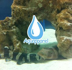 Find out what each commonly kept aquarium shark species' reported lifespan is in this blog post. Aquarium Sharks, Blog, Blogging