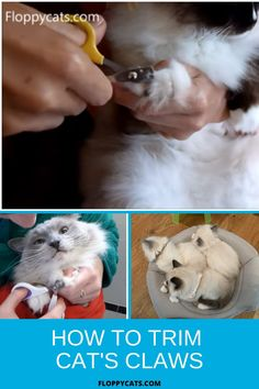 How to trim cat nails is a very important part of the grooming process. Ideally, it should be done once every 2-3 weeks to prevent claws from getting overgrown. Even though some cat owners are afraid to trim their cats' nails at home, the technique is quite easy to learn and with enough practice, it can become part of the routine. Find out everything about trimming your cat's claws and why it is important in this article. Trim Cat Nails, Cat Nail Clippers, Long Haired Cats, Outdoor Cats, Nails At Home, Cat Hair, Cat Grooming, Cat Health, Cool Cats