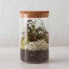 Specimen Jar Terrarium