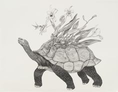 Tara Tucker's Bestiary...OMG these illustrations are gorgeous