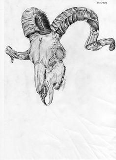 Ram Skulls Drawings Ram Skull by Razerblade07