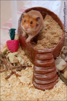 DIY clay sand bathtub! I am so going to do this for my Syrian hammy, Chicken Nugget!