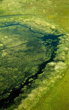 Delta del Okavango. Bostwana..