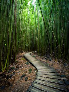Pipiwai Trail, Maui  Photograph by Mark Corcoran, My Shot  Hiking the Pipiwai Trail on the east side of Maui takes you from sea level to the spectacular 400-foot Waimoku Falls. Along the way the trail bisects a serene bamboo forest, which provides a welcome natural cooling effect.