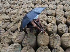 Indian rice farmer closes bags in which rice has to dry.
