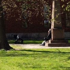 Puistolan bistro: Helsingin helmet: meri Helmet, Sidewalk, Plants, Hockey Helmet, Side Walkway, Sidewalks, Planters, Pavement, Walkways