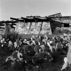 Taliesin West in 1942. Photograph by Robert Carroll May. Credit: The Frank Lloyd Wright Foundation Archives (The Museum of Modern Art | Avery Architectural & Fine Arts Library, Columbia University, New York).