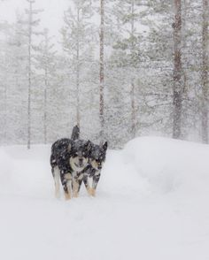 Side by side we go through snow and wind. Finland, Snow, Dogs, Instagram Posts, Outdoor, Outdoors, Pet Dogs, Doggies, Outdoor Games