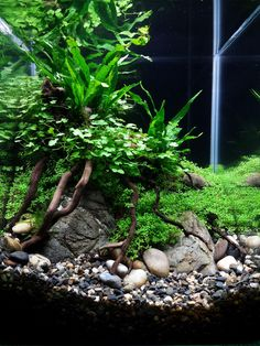 Basics of Keeping your own Freshwater Aquarium Did you ever dream of having an aquarium in your house? Most people think that having an aquarium inside the