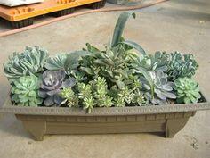 succulent window box - Google Search
