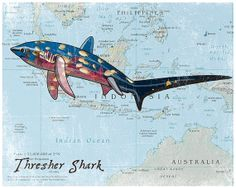 Items Similar To Thresher Shark Kids Animal Art Perfact Decoration For Ocean Sea Pirate Themed Bedroom On Etsy